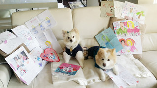 Toby & Pucci love their fan mail 💜