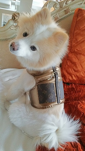 5af55a7d2433 Louis Vuitton Inspired Harness