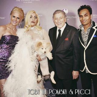 Toby the pomsky with Lady Gaga & Tony Bennett