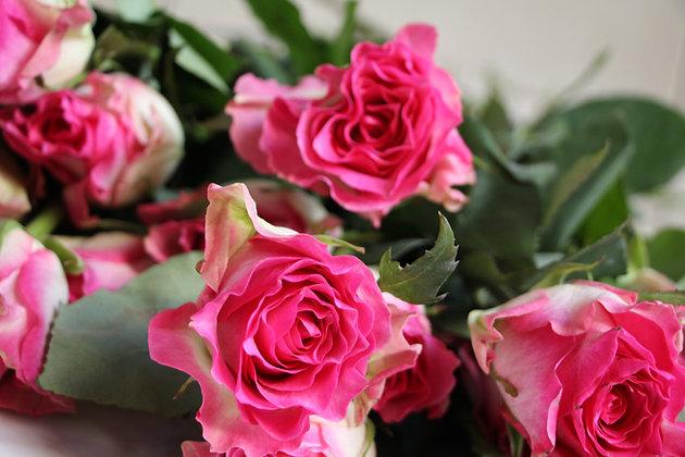 Blumm Pink Roses