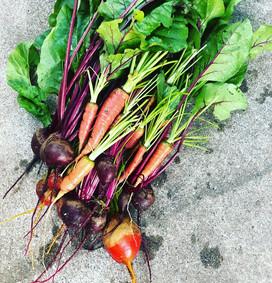 garden harvest edible garden