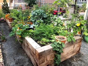 front yard garden.jpg