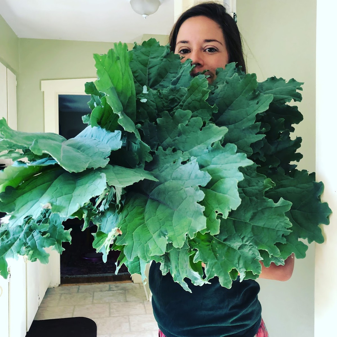 fort collins garden coaching client with kale