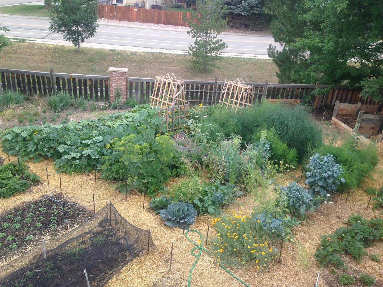backyard garden fort collins