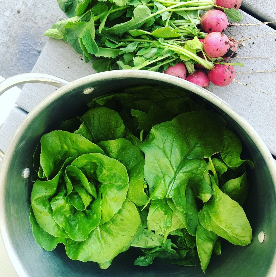 vibrant greens garden coaching harvest