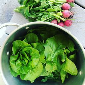 vibrant greens garden coaching harvest