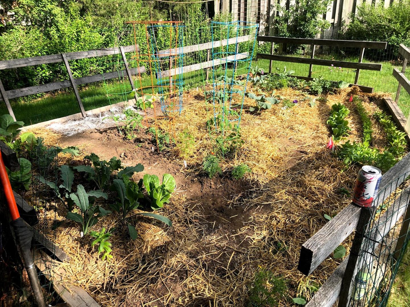 backgarden garden fort collins planting plan