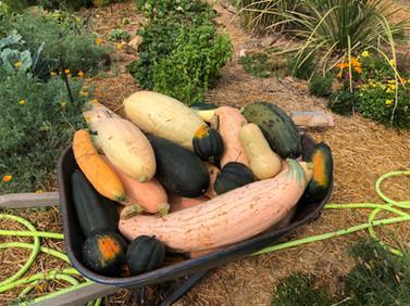 garden harvest fort collins