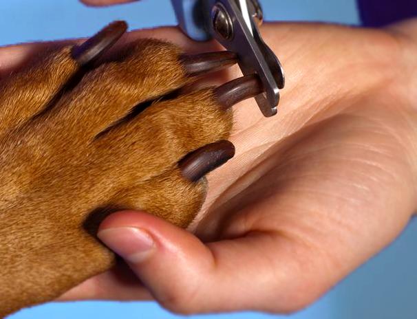 Nail Clipping