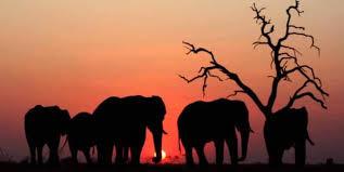 World Elephants Day!
