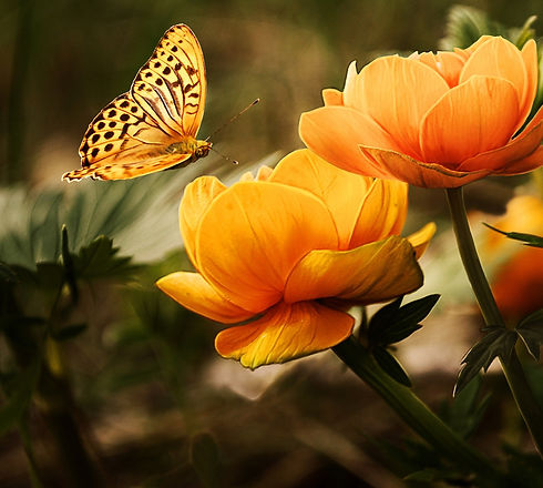 background-with-flower-and-butterfl-1326054113zvO_edited.jpg