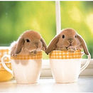 cute_baby_bunnies_photosculpture-p153162