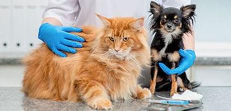 preventivos_clinica_veterinaria_dr_diaz_umpierre.jpg