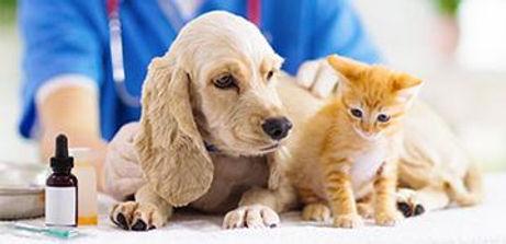 vacunacion_clinica_veterinaria_dr_diaz_umpierre.jpg