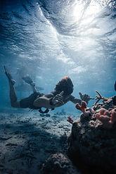 coral-gardeners-ecotour-1.jpg