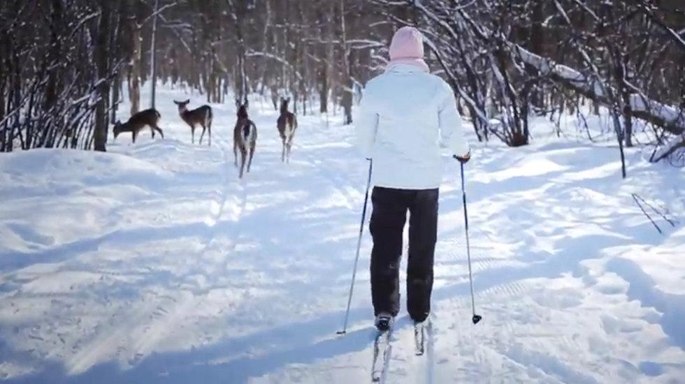 day-tripper-ski-deer980x550.jpg
