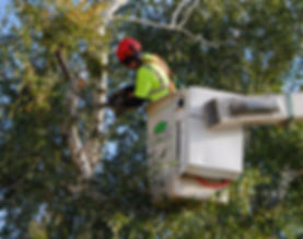Mayer Tree Service in Essex, MA