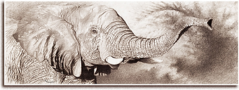 jeune elephant.png