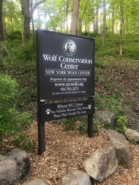 Spotlight on the Wolf Conservation Center