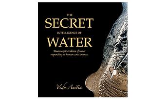 Veda Austin Book Cover.png