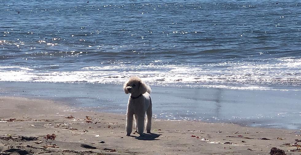 sammie on beach.png