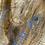 Thumbnail: Silver Maple -SM70