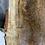 Thumbnail: Sliver Maple -SM67