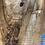 Thumbnail: Sliver Maple -SM69