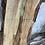 Thumbnail: Silver Maple -SM63