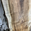 Thumbnail: Silver Maple -SM81