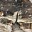 Thumbnail: Black Walnut -BWC01