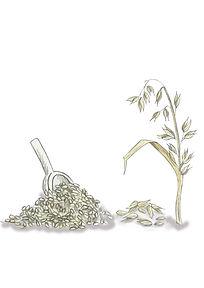 Rolled Porridge Oats