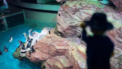 New England Aquarium - Boston, MA