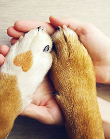Dog paws with a spot in the form of hear
