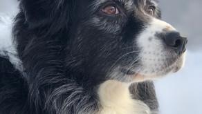 Approfondissement de la Communication Animale