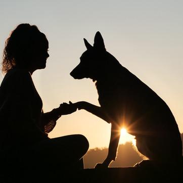 Les 5 étapes pour apprendre la communication animale