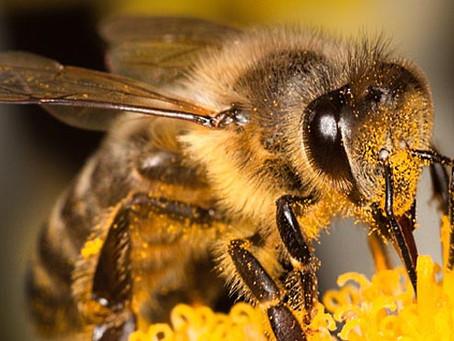Le message des abeilles