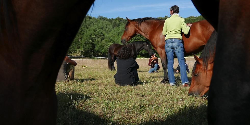 """Webinaire """"reliance avec le peuple des chevaux: 5 piliers vers l'accomplissement de soi"""""""