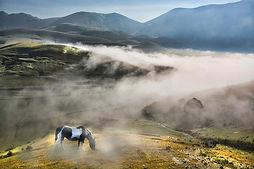 Italy_Horses_Fields_435168.jpg