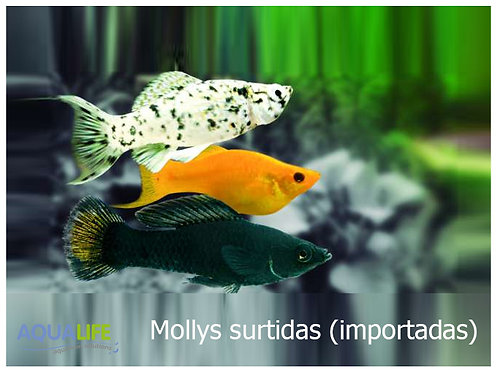 Molly Surtidas importadas