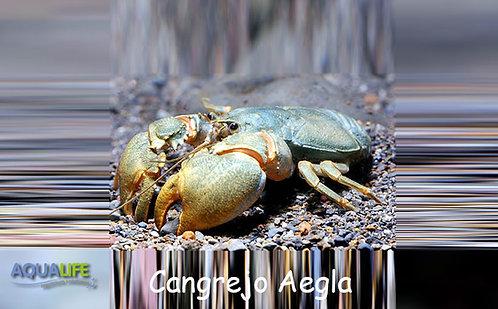 Cangrejo Aegla