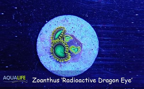 Zoanthus 'Radioactive Dragon Eye'
