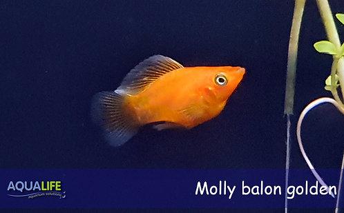 Molly balón surtidas