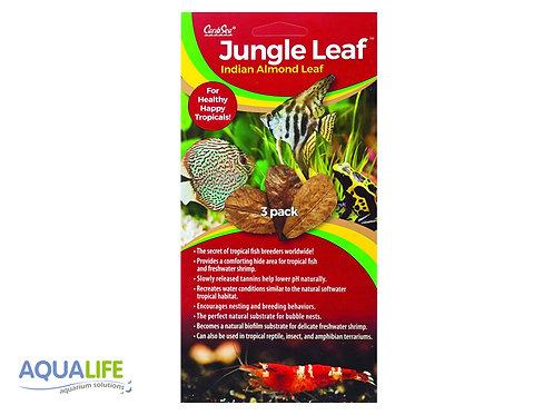 Caribsea Jungle leaf indian (hoja de almendro) 3 hojas