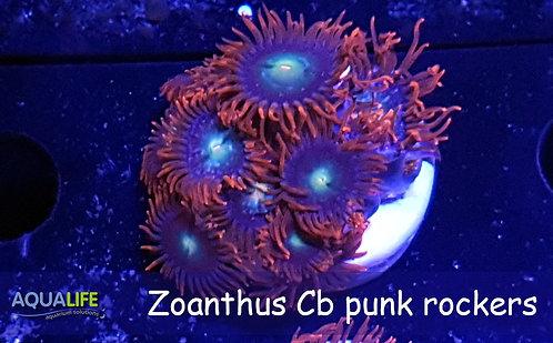 Zoanthus Cb punk rockers