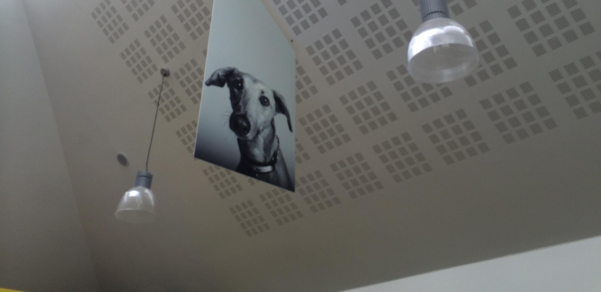 Hanging board