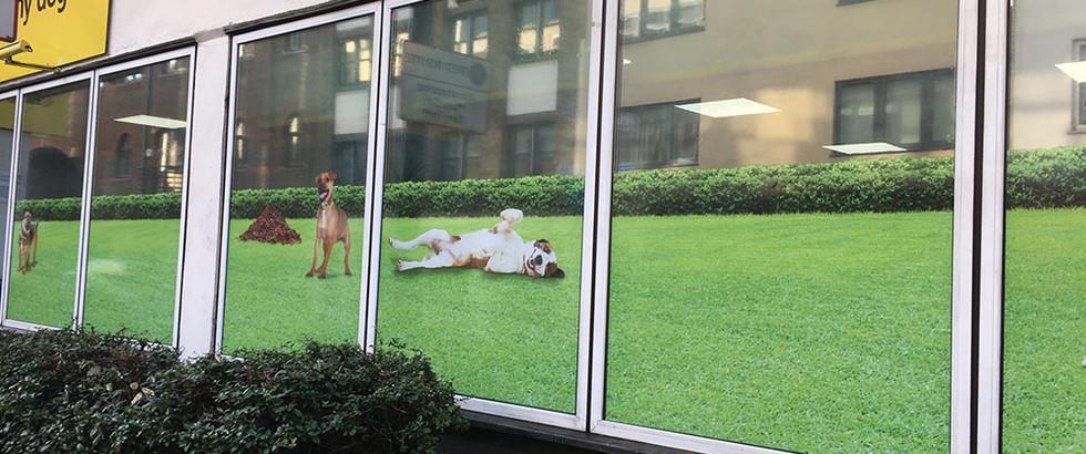 Window manifestations