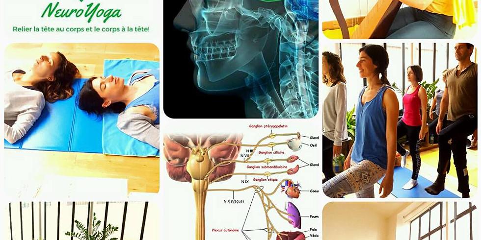 NeuroYoga® et Anatomie , systéme nerveux les bases (1)