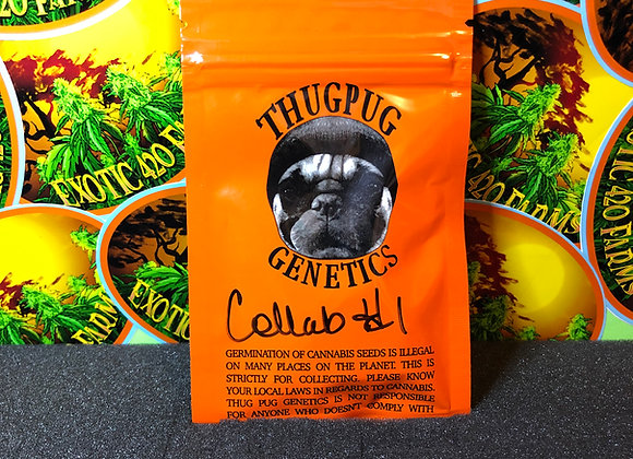 Collab 1 ThugPug