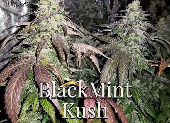 Black Mint Kush
